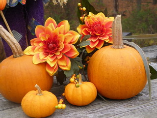 Autumn Pumpkins and Flowers
