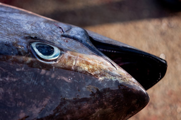 tunafish.023