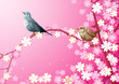 Cherry blossoms and Birds