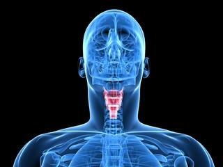 Röntgenaufnahme - menschliche Kopf mit markiertem Kehlkopf