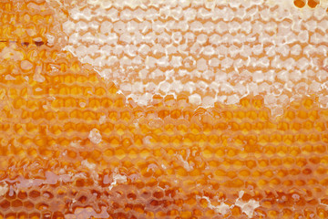 honeycomb with open and close cells as background