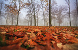 Autumn foliage, trees and fog in November poster