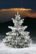 icy christmas tree
