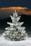 icy christmas tree