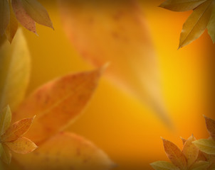 Fall leaves background