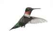 Isolated Male Ruby-throated Hummingbird (archilochus colubris)
