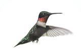 Isolated Male Ruby-throated Hummingbird (archilochus colubris)