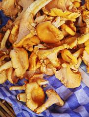 chantarelle mushrooms
