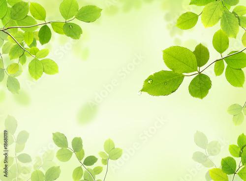 Fototapeta leaves