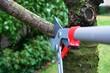 tree pruning - 18697738