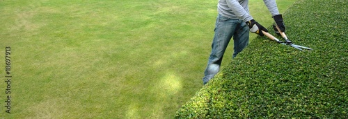 Foto Spatwand Tuin pruning a hedge