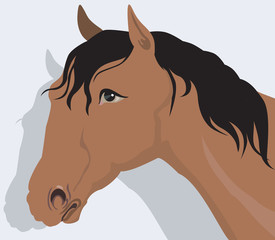 muscular horse with black hair in light back ground