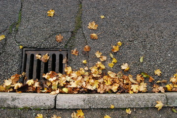 Autumn leaves in the road.