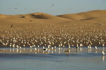 Sanddünen in Agadir mit Möwen