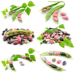 Collection of Ripe Haricot Beans with Seed Isolated on White