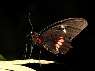 Mariposa en penumbra