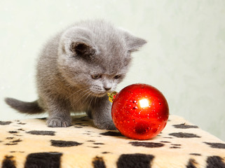 Baby cat with Christmas decoration