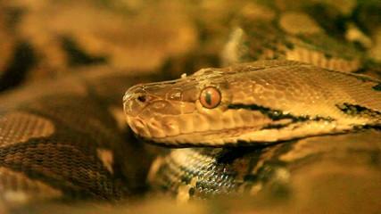 le serpent....