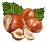 Photorealistic vector illustration. Hazelnuts with leaves.