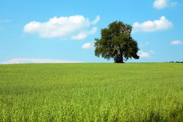 Baum , Feld