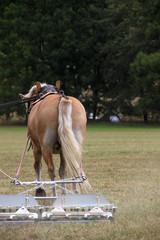 Landarbeit mit Pferd