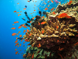 Coral on Great Barrier Reef Australia