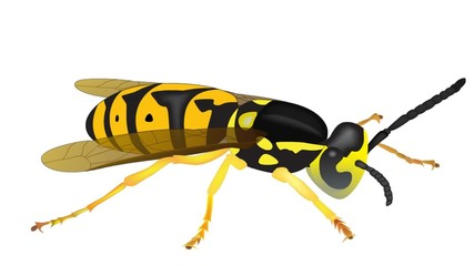 yellow jacket with moving wings