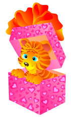 Gift a tiger in a box