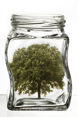 albero in vaso di vetro trasparente