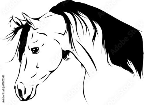 Arabian Horse 04