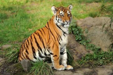 Zoo 124