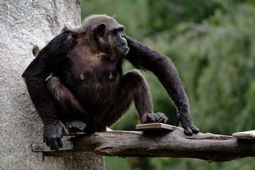 sitting monkey