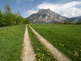 Fototapety Der Weg zum Traunstein im Frühling