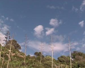 Vento forte e vegetazione mediterranea