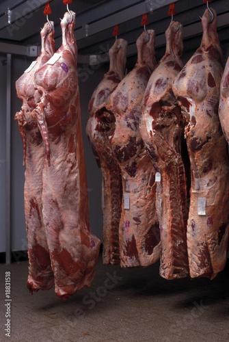 Carne macellata