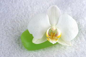 green soap and orchid