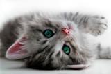 Kitten rest - isolated