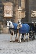 Stephansdom cathedral with the carriage in Vienna