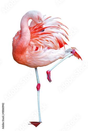 Foto op Aluminium Flamingo Détourage d'un flamant rose debout sur une patte