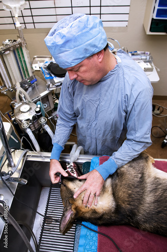 poster of Veterinarian with dog pre-operation