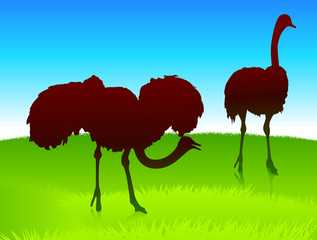 ostrich on green field background