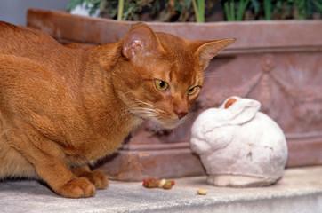 chat abyssin à l'arrêt devant une statue de lapin