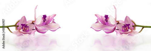 beautiful purple orchids lying on white background with water