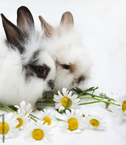 Leinwanddruck Bild Two little rabbits