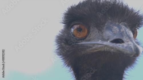 Close up of EMu