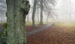 Footpath in fog