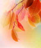 Fototapety Autumn Leaves