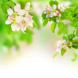 Fototapeta gałąź - natura - Drzewo