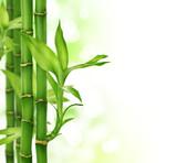 Fototapety Bamboo border