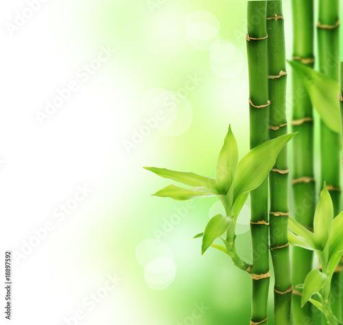 Fototapeten,bambus,landesgericht,isoliert,kurort